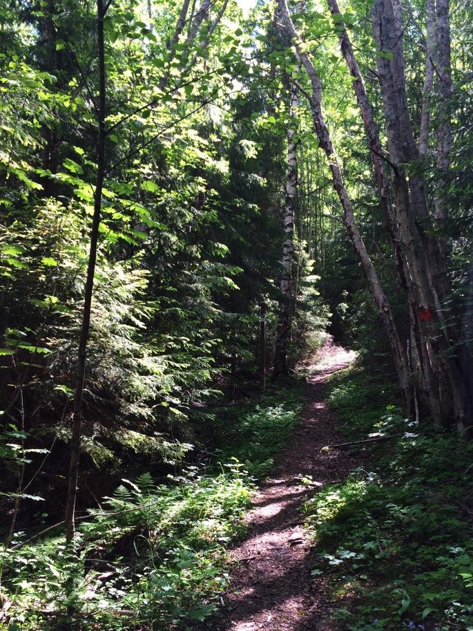 Trail_01