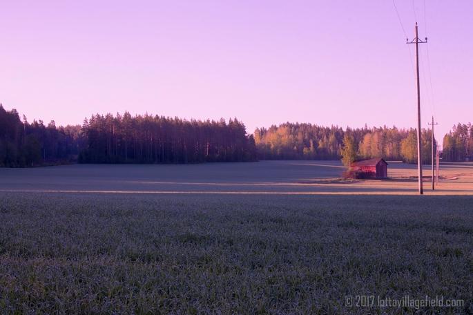 Dreamy Fields
