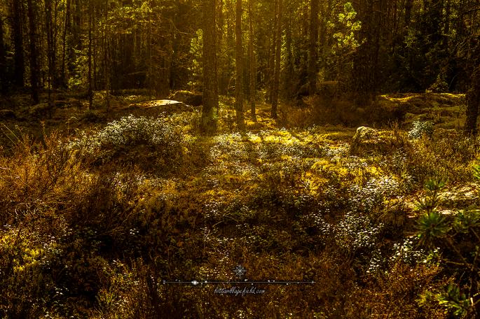 FairytaleForest