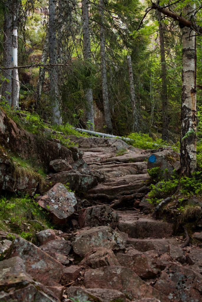 forest-mountain-rock-path