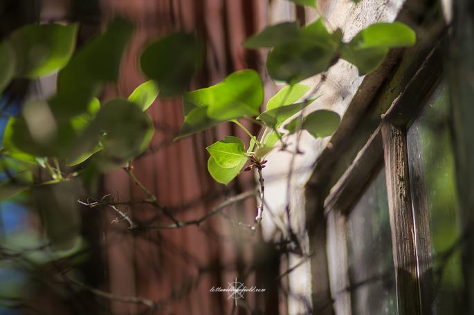 LeafyWindow