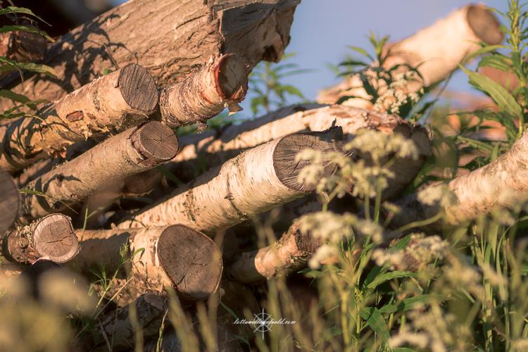 TreeTrunks