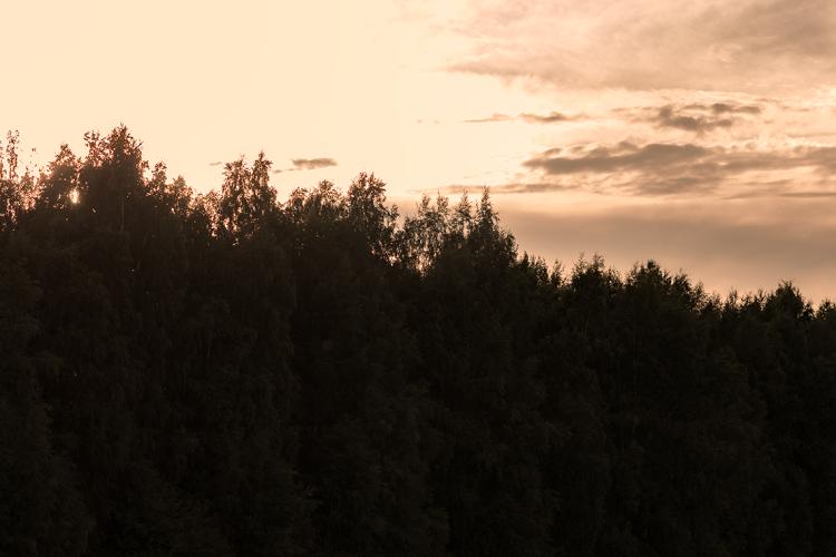 glowing-treetops