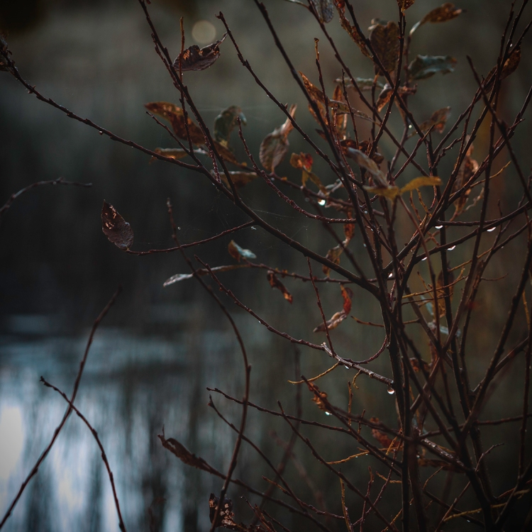 autumn-colours-on-branches