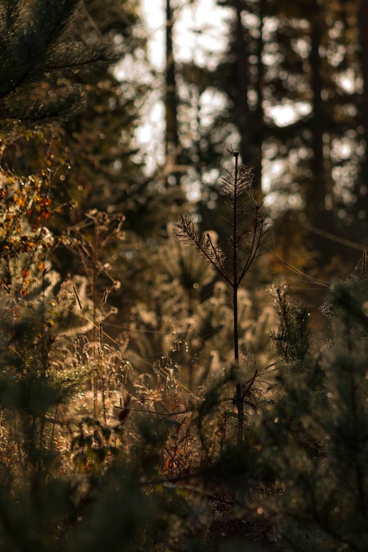 autumn-forest-shimmer