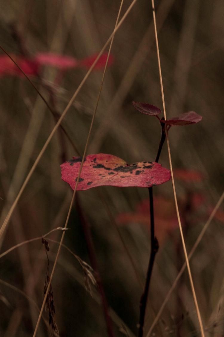 autumn-leaf-close-up
