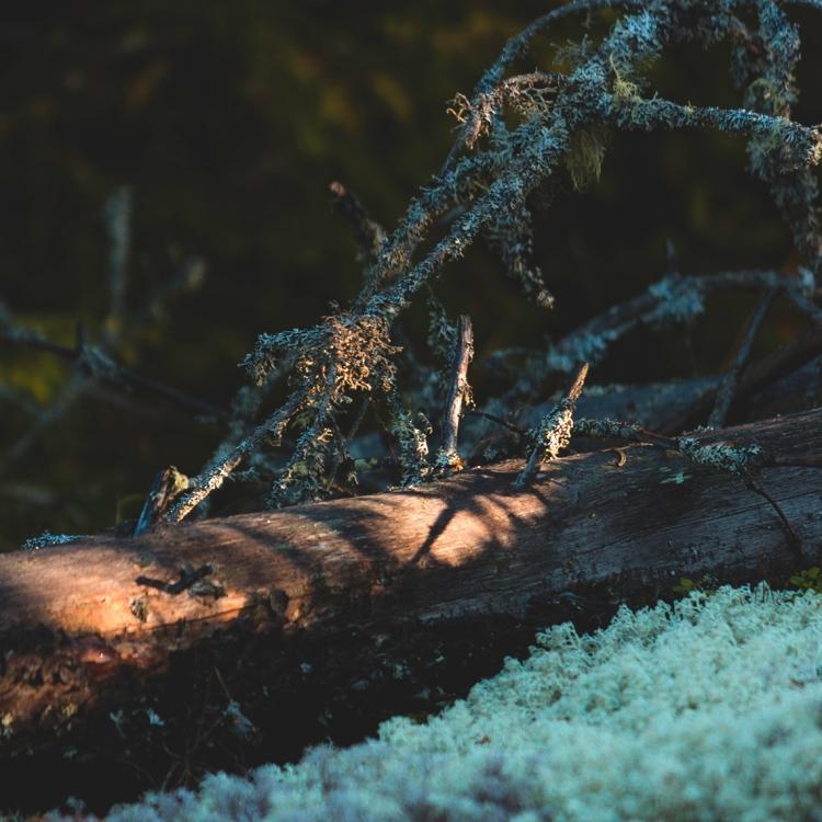 autumn-light-lichen-wood-log