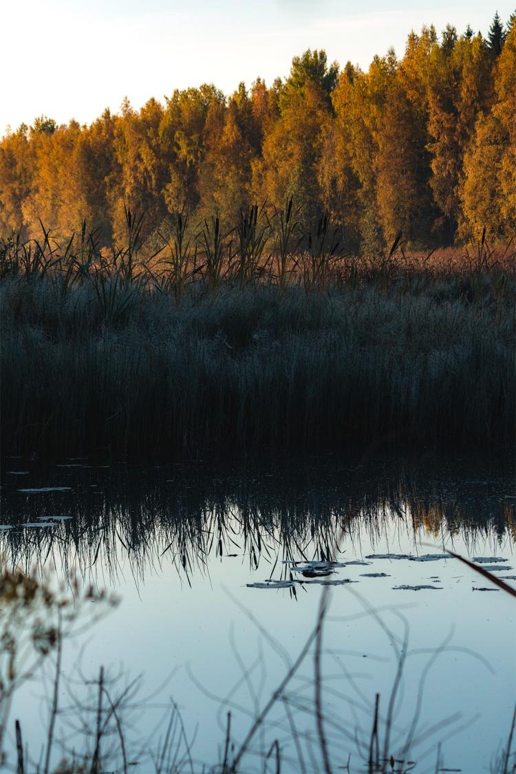 autumn-reflection-reed