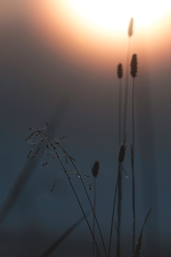 dew-drops-in-misty-sunrise