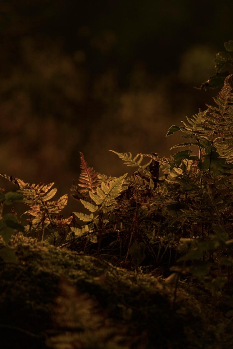 forest-fern-moss