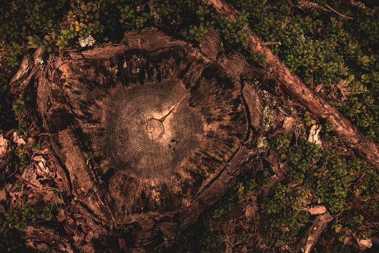 layered-age-of-tree-stump-above