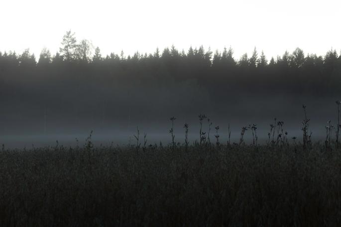 misty-fields