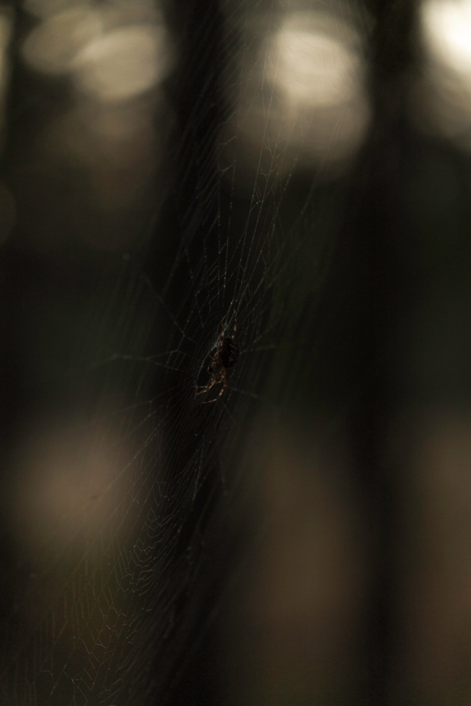 spider-web-dusk