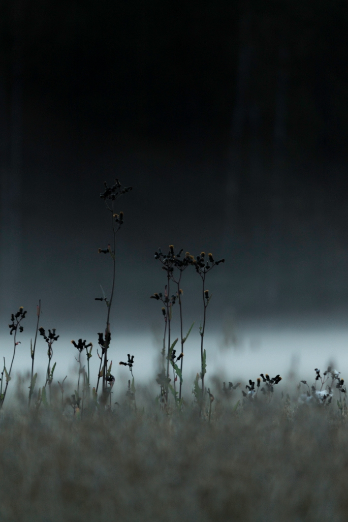 stand-alone-in-the-mist