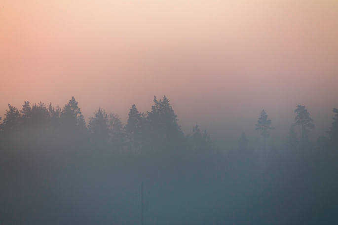 thick-mist-sunrise-treeline