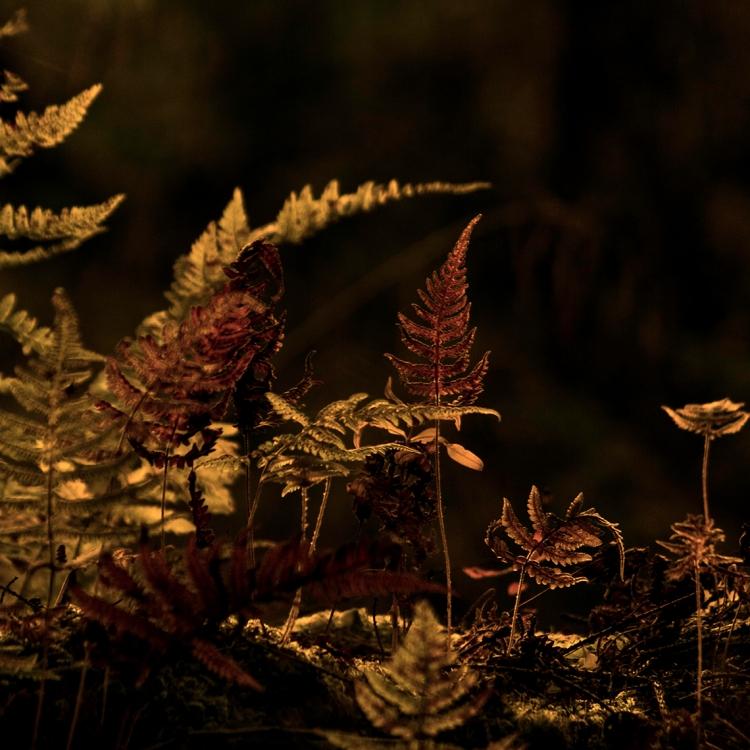 vibrant-fern-close-up