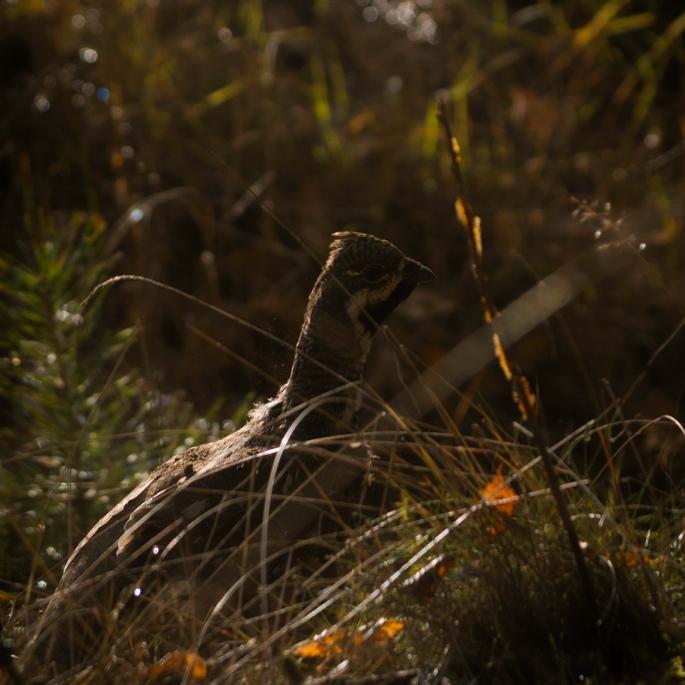 a-forest-bird