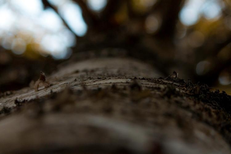 autumn-birch-bark-closeup