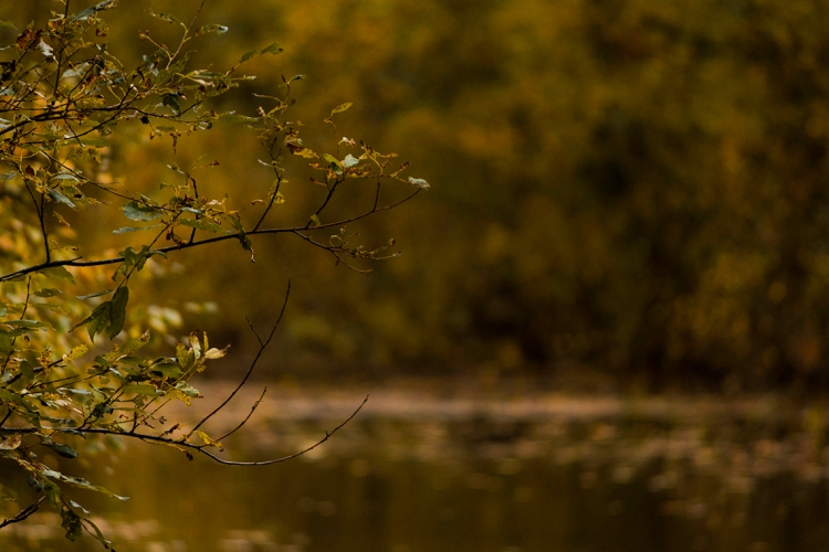 autumn-branches-over-water