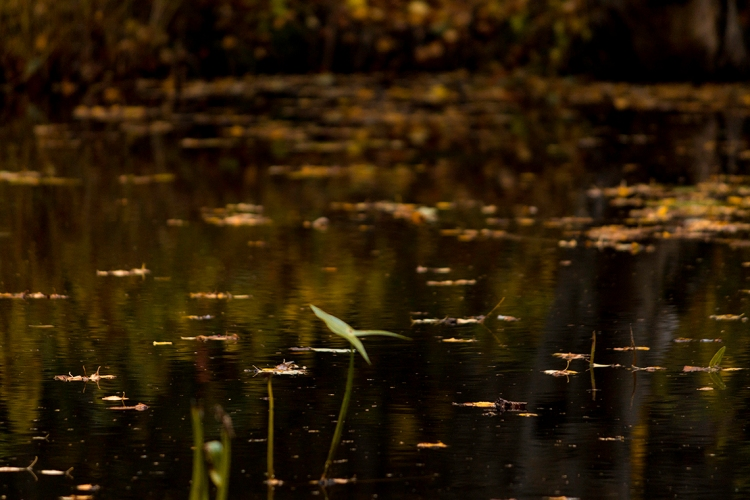 autumn-reflections-in-water