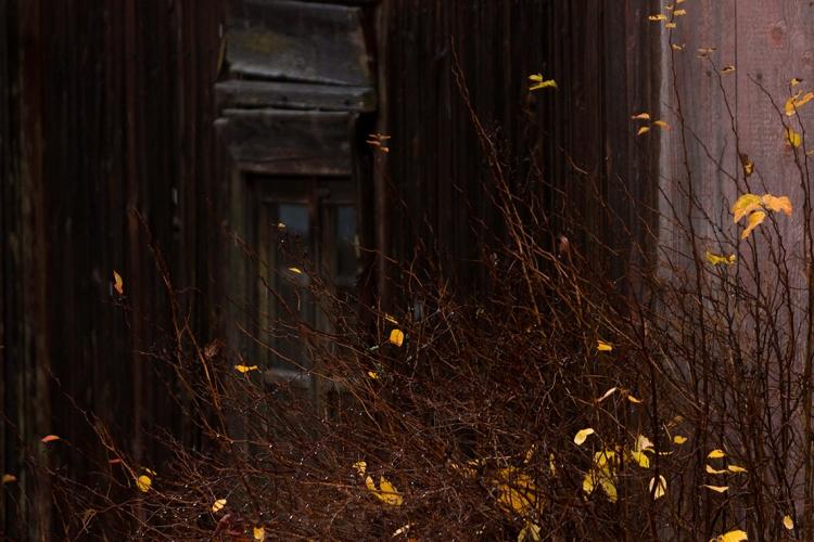 bare-autumn-bush-and-building