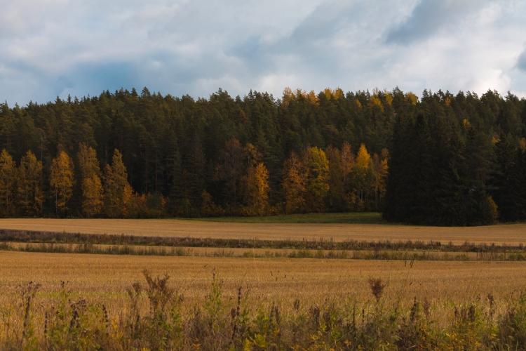 fields-in-rohdainen