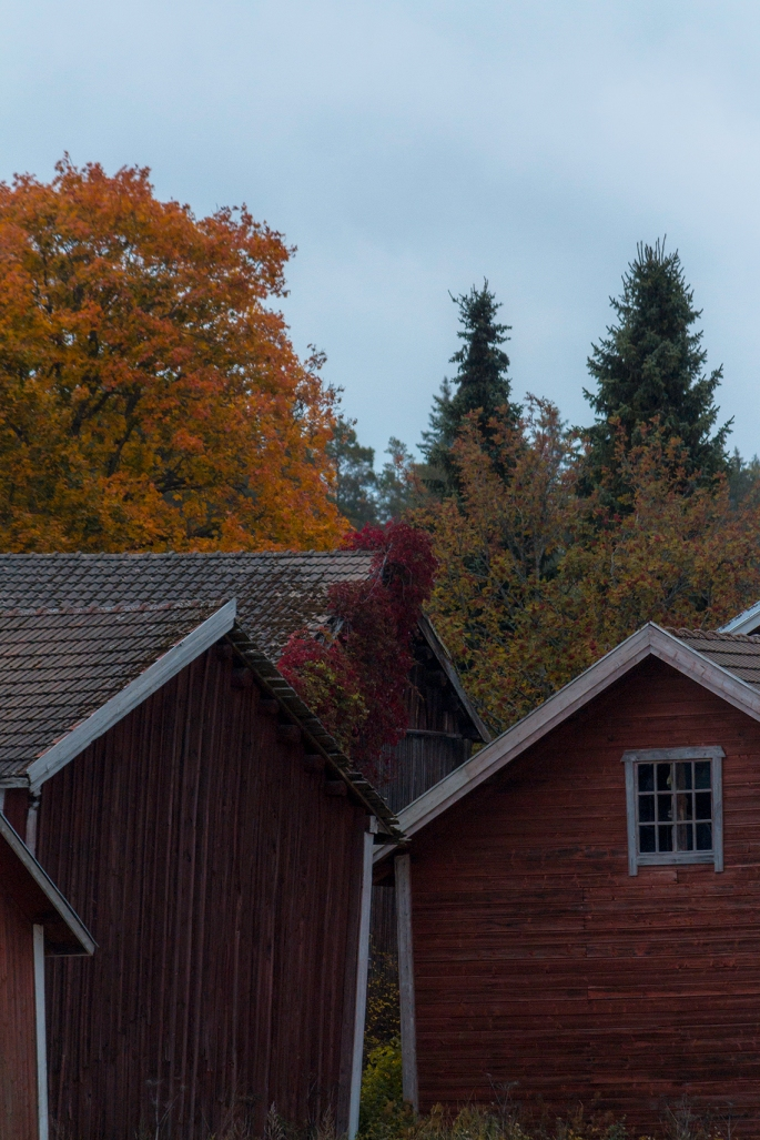 finnish-autumn-farm-buildings
