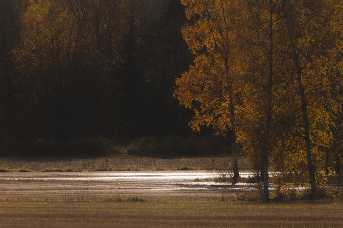 flooded-field-in-sunlight
