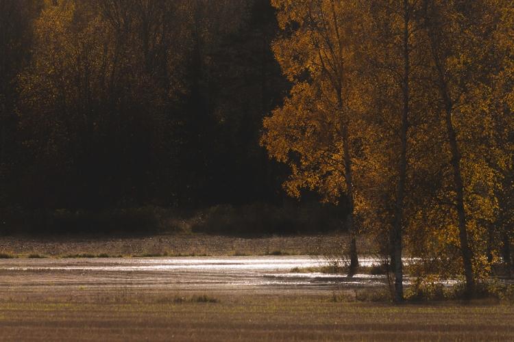 flooded-field-in-sunlight