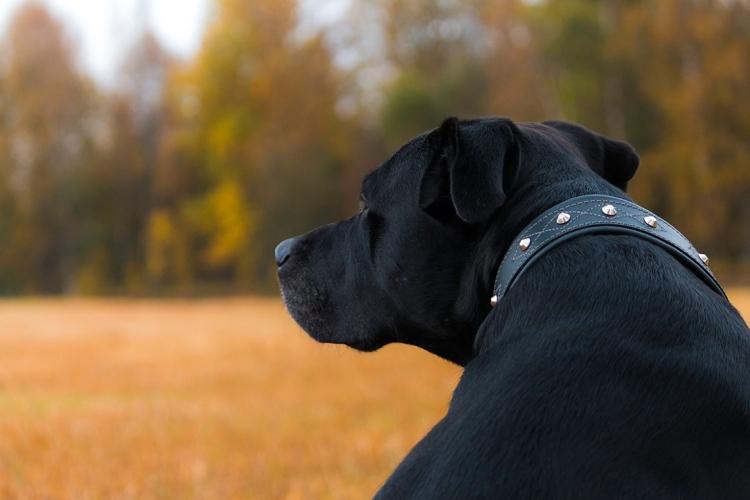 loke-dog-in-autumn-field