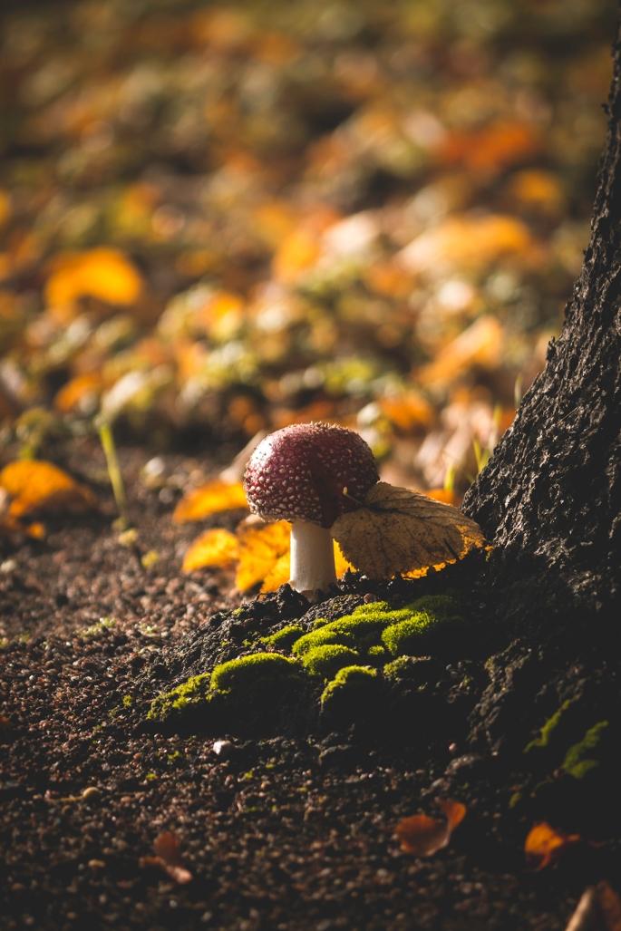 park-mushroom-vanha-rauma