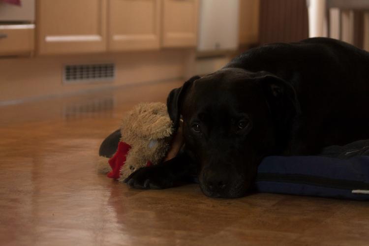 sleepy-loke-dog