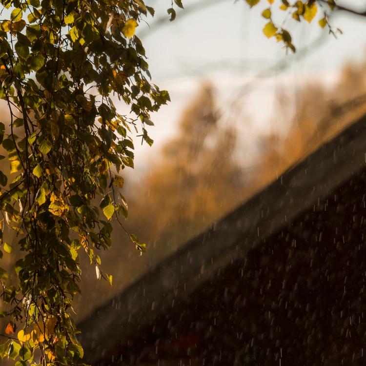 sunlit-rain