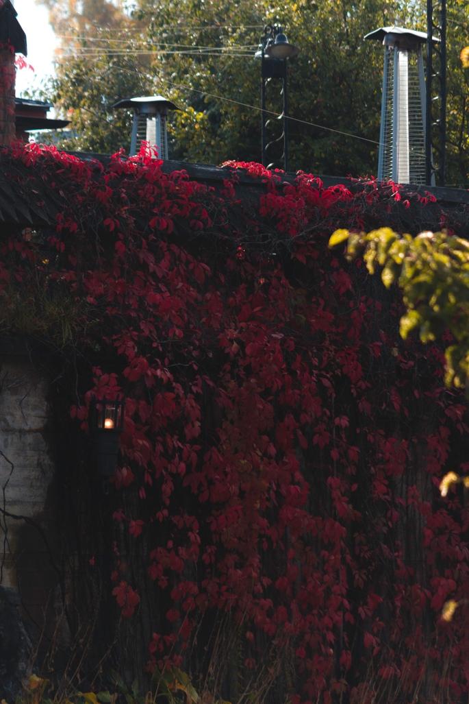 vibrant-vines-vanha-rauman-kellari