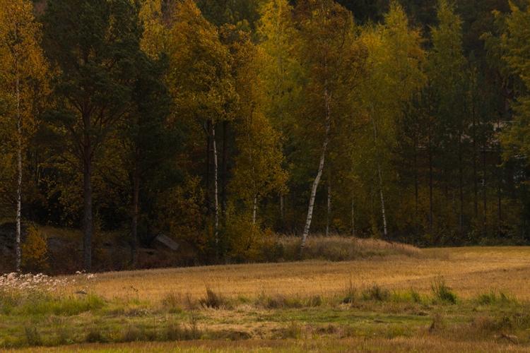 windy-autumn-trees