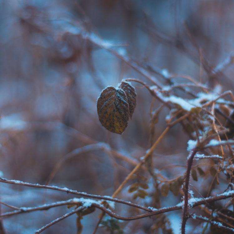 beautiful-leaves-in-snowy-depth-of-field