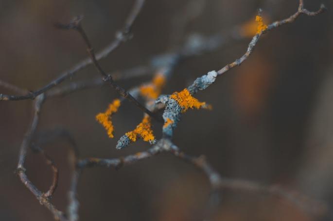 colourful-lichen-and-branches