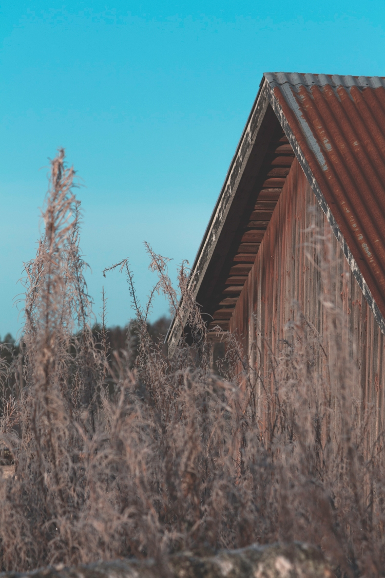 frozen-fireweed-in-farm-house-foreground