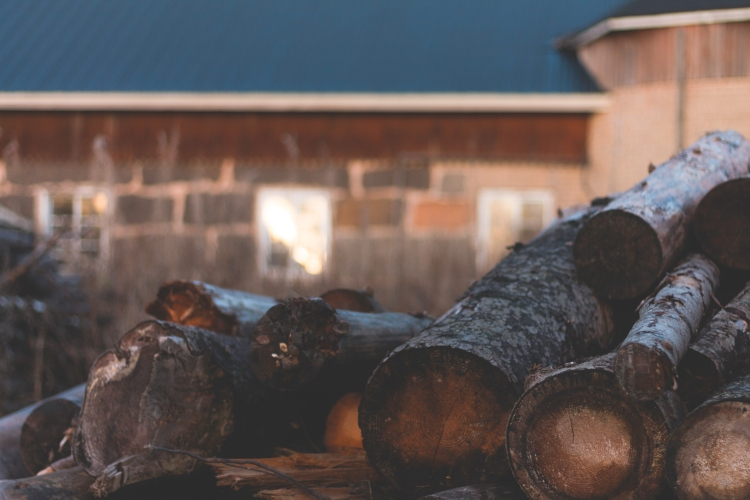 logs-and-magical-light