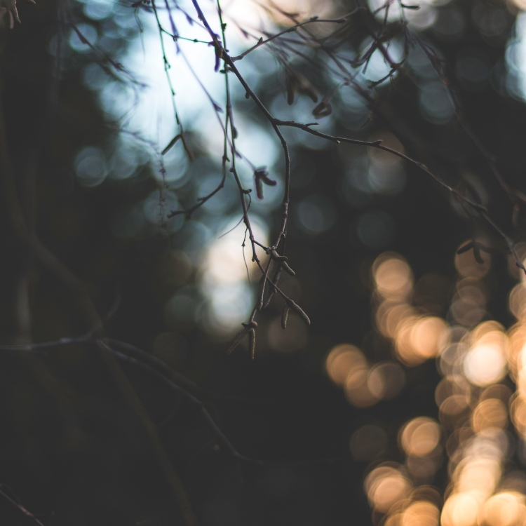 magical-bokeh-and-branches