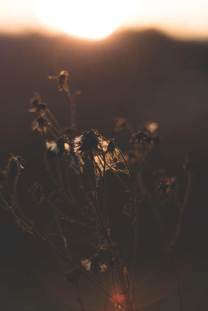 magical-sunset-and-depth-of-field