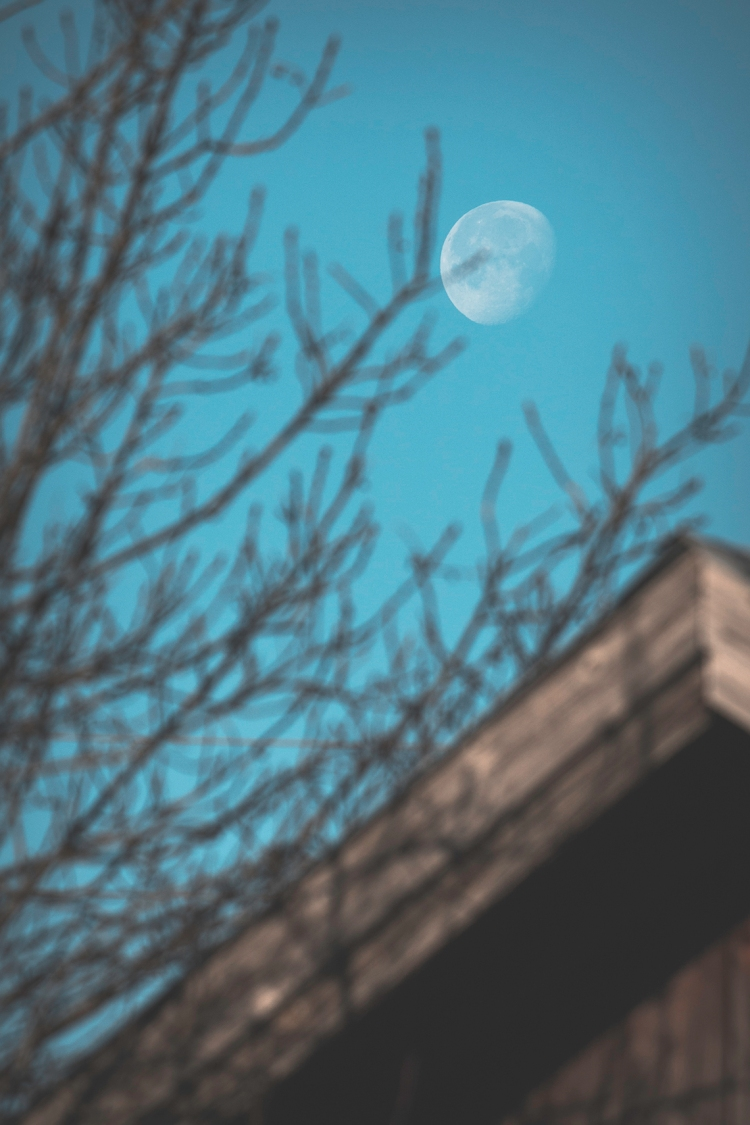 morning-lit-moon-through-blurred-branches