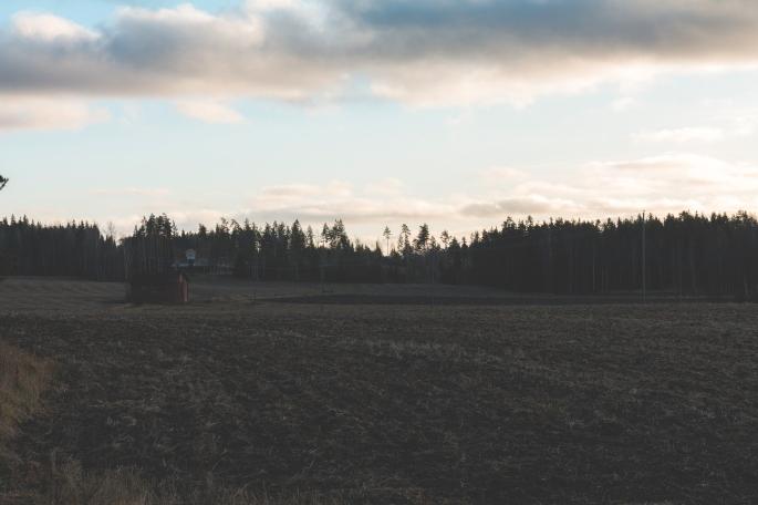 soft-winter-light-over-fields