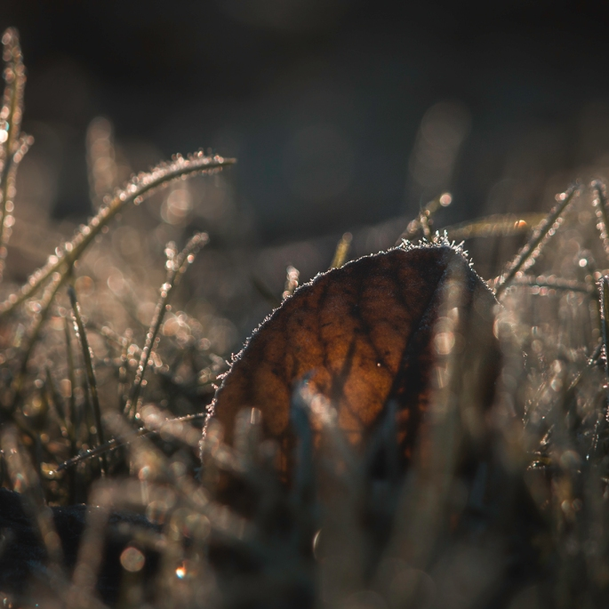sunlight-through-a-frosty-leaf