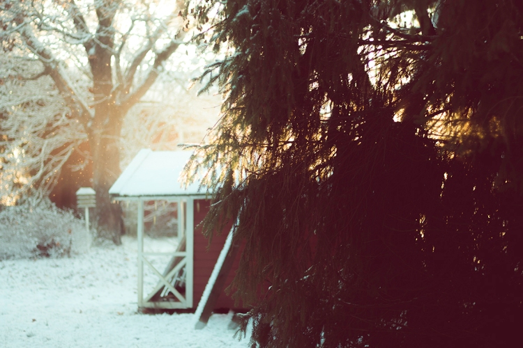 snow-glitter-in-hazy-light