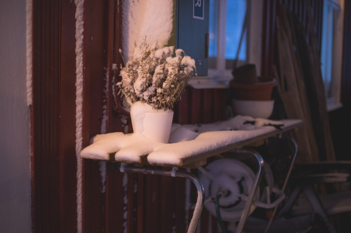 pot-of-lavender-in-snow
