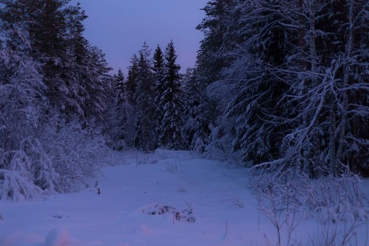 snow-laden-trees-in-twilight