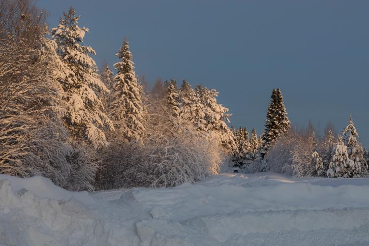 soft-winter-glow