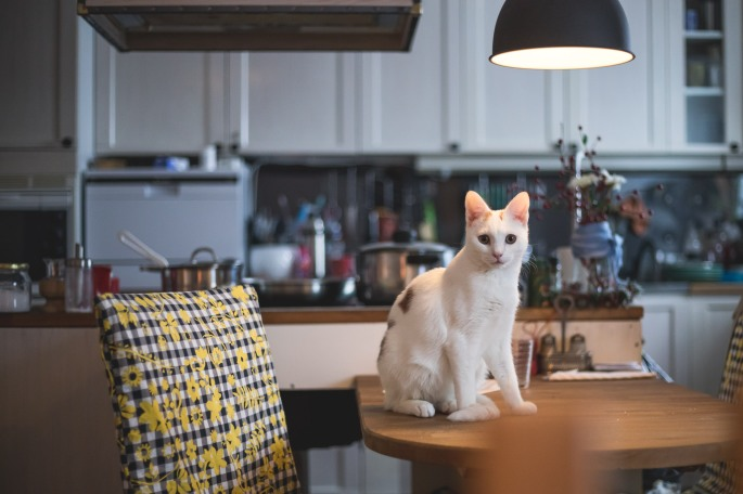 tobidoo-the-cat-on-kitchen-table