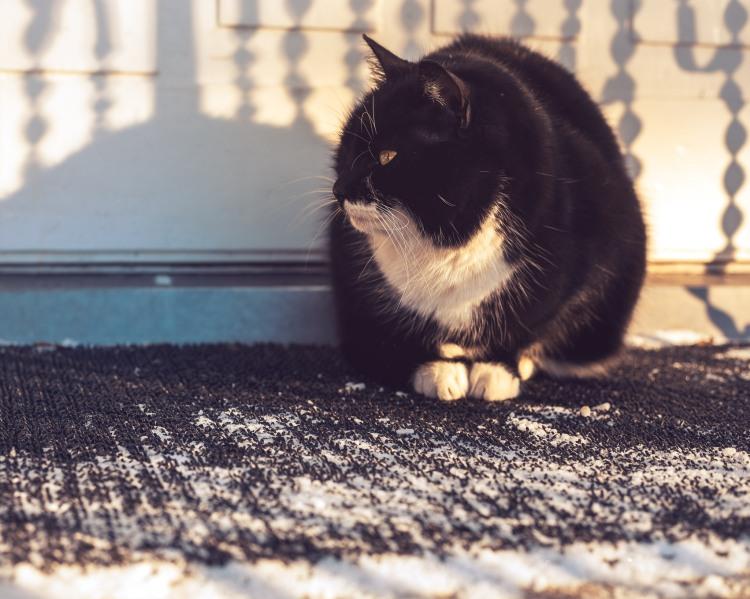 manta-the-rarely-seen-farm-cat